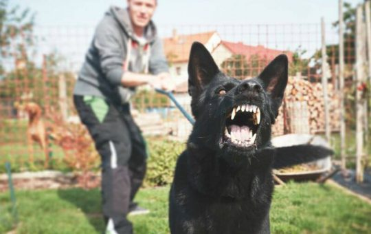 Stop Dog Barking